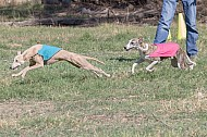 Lure Coursing Photos, Chino 2/17-2/18, 2018