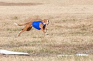 2017 SoCal Cup Lure Coursing
