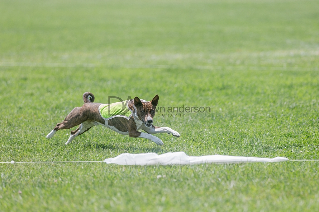 SoCal Lure Coursing 2019 05/12 Lure Coursing Camarillo,